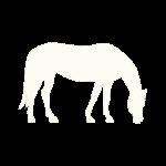 Geriatric Horse Boarding & Care